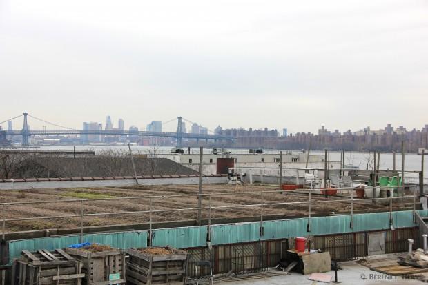 Ferme urbaine sur les toits de Greenpoint, Brooklyn