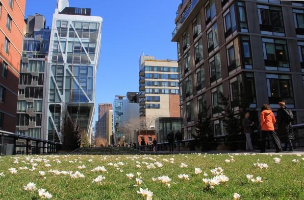 Nature sur la high line, Manhattan