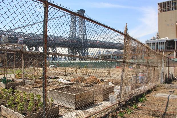 Ferme urbaine sur le site de la raffinerie de sucre Domino, Brooklyn